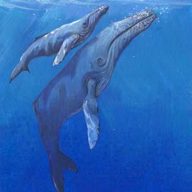 Sea Life - Tile 1